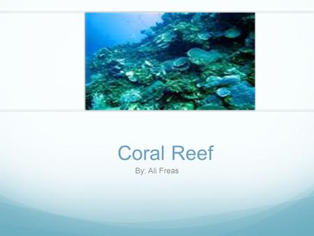 Coral Reef By: Ali Freas. Coral Reef Food Web This food web shows many different animals that survive in the coral reef. They each need each other to.