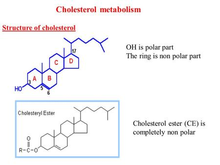Cholesterol metabolism Structure of cholesterol OH is polar part The ring is non polar part Cholesterol ester (CE) is completely non polar.
