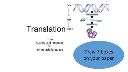 Translation from nucleic acid language to amino acid language Draw 7 boxes on your paper.