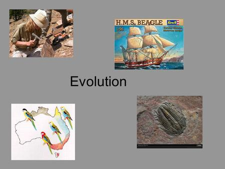 Evolution. Scientists believe that all living organisms on earth share a common ancestor. Newer species arise from older species by evolution. Evolution.