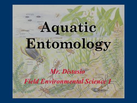 Aquatic Entomology Mr. Distasio Field Environmental Science I.