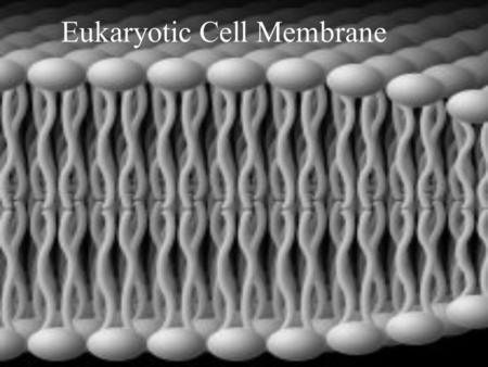 Eukaryotic Cell Membrane. Cell Membrane Cell membrane: the flexible boundary of a cell (also called a plasma membrane) It separates a cell from its surroundings.
