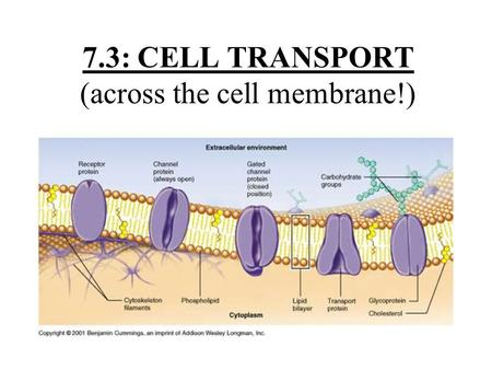 7.3: CELL TRANSPORT (across the cell membrane!) Vocabulary Osmosis Diffusion Facilitated Diffusion Osmotic Pressure Isotonic Hypertonic Hypotonic Active.