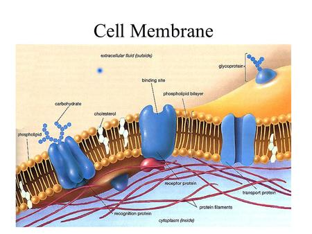 Cell Membrane. Cell Membrane (cont'd) The conditions within a cell must remain relatively constant at all times The process of maintaining this constant.
