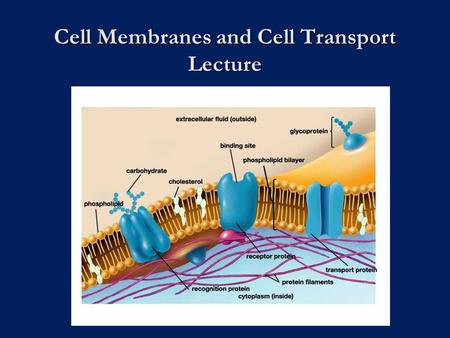 Cell Membranes and Cell Transport Lecture. Cell Diversity.