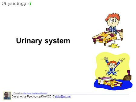 Urinary system Designed by Pyeongsug Kim ©2010 Picture from