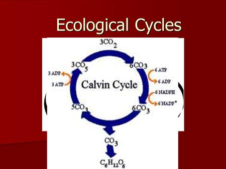 Ecological Cycles. Three types of cycles Water Cycle Water Cycle Carbon Cycle Carbon Cycle Nitrogen Cycle Nitrogen Cycle.