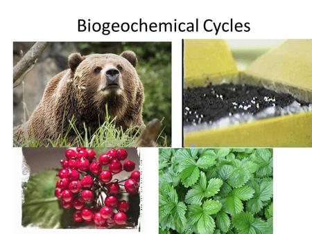 Biogeochemical Cycles. I. Cycling in Nature A.The structure of ecosystems is influenced by the availability of nutrients and energy. B.The elemen ts essential.