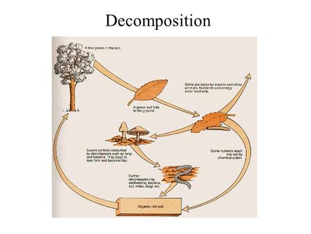 Decomposition. Role in ecosystems – decomposition is gradual disintegration of dead organic matter and is brought about by both physical and biological.