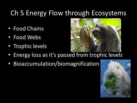 Ch 5 Energy Flow through Ecosystems Food Chains Food Webs Trophic levels Energy loss as it's passed from trophic levels Bioaccumulation/biomagnification.