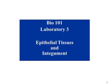 1 Bio 101 Laboratory 3 Epithelial Tissues and Integument.