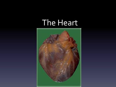 The Heart. Function Transportation system by which oxygen and nutrients reach the body's cells, and waste materials are carried away. Also carries substances.