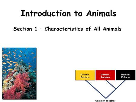 Introduction to Animals Section 1 – Characteristics of All Animals Domain Bacteria Domain Archaea Domain Eukarya Common ancestor.
