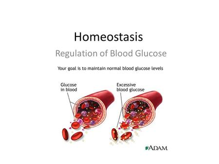 Homeostasis Regulation of Blood Glucose. Homeostasis Animals possess a nervous system and a hormonal system that interact in order to maintain the constancy.