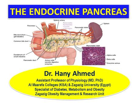 Dr. Hany Ahmed Assistant Professor of Physiology (MD, PhD) Al Maarefa Colleges (KSA) & Zagazig University (Egypt) Specialist of Diabetes, Metabolism and.
