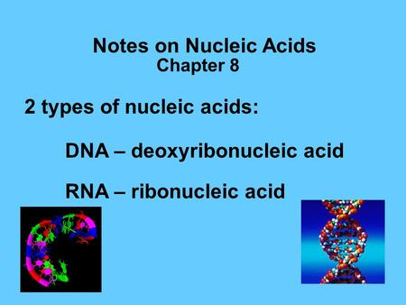 Notes on Nucleic Acids 2 types of nucleic acids: DNA – deoxyribonucleic acid RNA – ribonucleic acid Chapter 8.