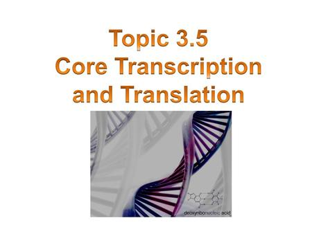 Core Transcription and Translation