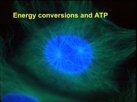 Copyright © 2005 Pearson Education, Inc. publishing as Benjamin Cummings Energy conversions and ATP.