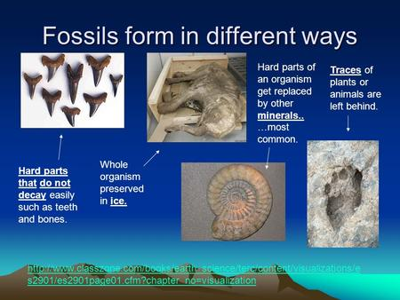 Fossils form in different ways  s2901/es2901page01.cfm?chapter_no=visualization.