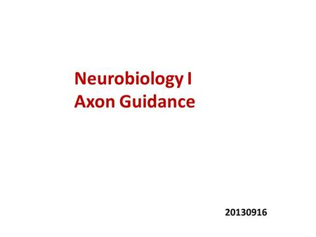Neurobiology I Axon Guidance 20130916. Why guidance is important?