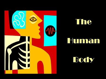 The Human Body. Anatomical terms Directional –Midline –Medial –Lateral –Bilateral –Mid-axillary –Anterior –Posterior –Ventral –Dorsal –Inferior –Superior.