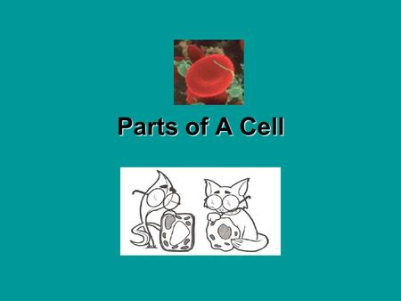 Parts of A Cell Everything on Earth is made up of atoms and molecules. So what makes you different from something like a rock? You, like all living things,