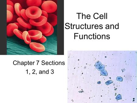 The Cell Structures and Functions Chapter 7 Sections 1, 2, and 3.