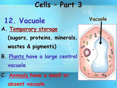 1 12. Vacuole A. Temporary storage (sugars, proteins, minerals, wastes & pigments) B. Plants have a large central vacuole C. C. Animals have a small or.