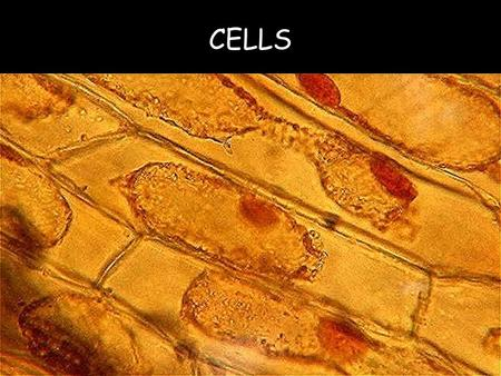 CELLS. A cell is the smallest basic unit of matter that can carry on the process of life.