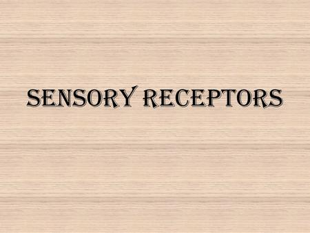 Sensory Receptors. (a) Receptor is afferent neuron.(b) Receptor regulates afferent neuron. To CNS Afferent neuron To CNS Receptor protein Sensory receptor.