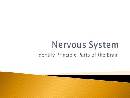 Identify Principle Parts of the Brain.  Identify the principle parts of the nervous system  Describe the cells that make up the nervous system  Describe.