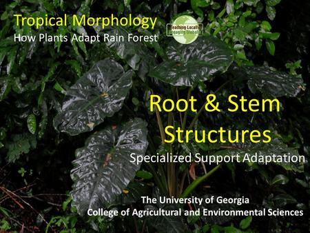 Tropical Morphology How Plants Adapt Rain Forest The University of Georgia College of Agricultural and Environmental Sciences Root & Stem Structures Specialized.