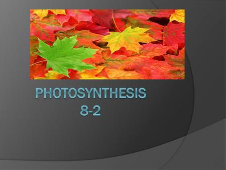 Photosynthesis 8-2.
