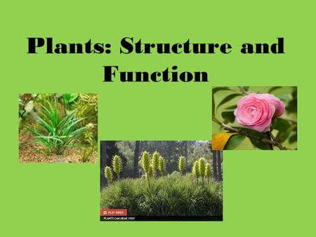 Plants: Structure and Function. What do you already know... Name the process that occurs within the leaves of green plants. What is the equation for this.
