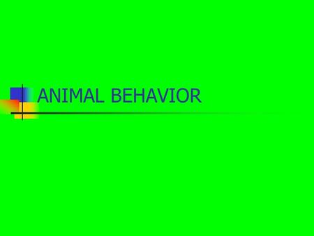 ANIMAL BEHAVIOR. In this activity you will: LEARN THE DIFFERENT KIND OF GROUPS ANIMALS LIVE IN LEARN HOW DIFFERENT KINDS OF ANIMALS CAN LIVE TOGETHER.