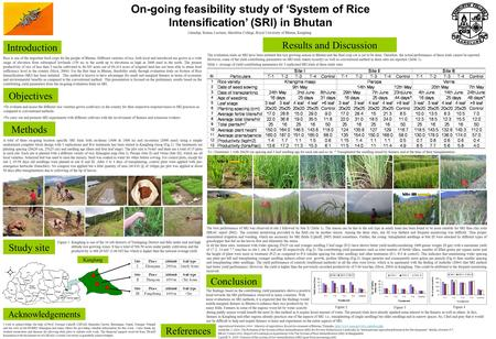 On-going feasibility study of 'System of Rice Intensification' (SRI) in Bhutan Rice is one of the important food crops for the people of Bhutan. Different.