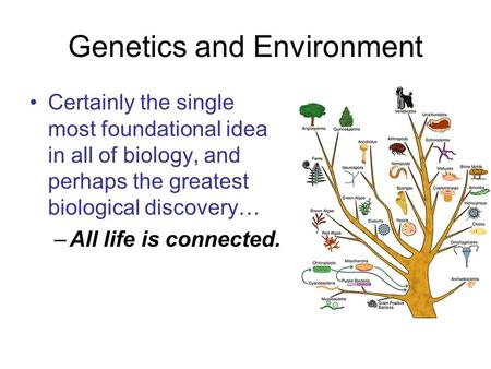 Genetics and Environment Certainly the single most foundational idea in all of biology, and perhaps the greatest biological discovery… –All life is connected.