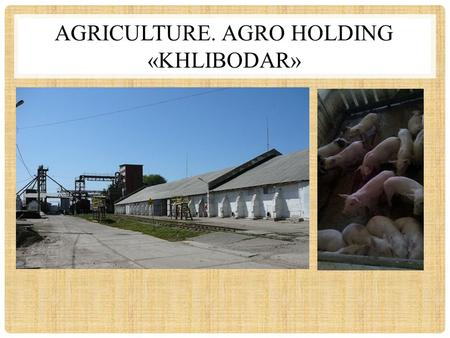 "AGRICULTURE. AGRO HOLDING «KHLIBODAR». KEY FACTS: Agro holding ""Khlibodar"" is a vertically integrated structure, which includes holding company LLCKhlibodar,"