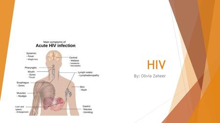 HIV By: Olivia Zaheer. What it is HIV stands for human immunodeficiency virus. HIV is a virus in the immune system that can not be cured. Your immune.