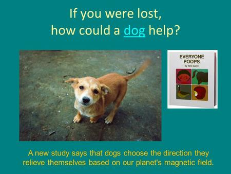 If you were lost, how could a dog help?dog A new study says that dogs choose the direction they relieve themselves based on our planet's magnetic field.