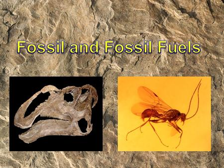 What is a fossil? 1. Organisms die 2. Their remains were covered with sand, soil, and other sediments. 3. These sediments harden over and around the organism's.