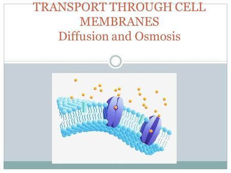 TRANSPORT THROUGH CELL MEMBRANES Diffusion and Osmosis.