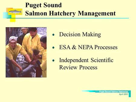 Puget Sound Salmon Hatcheries April 2003 Puget Sound Salmon Hatchery Management Decision Making ESA & NEPA Processes Independent Scientific Review Process.