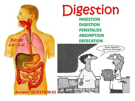 Digestion INGESTION DIGESTION PERISTALSIS ABSORPTION DEFECATION