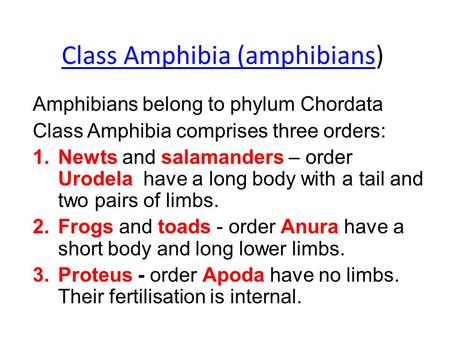 Class Amphibia (amphibiansClass Amphibia (amphibians) Amphibians belong to phylum Chordata Class Amphibia comprises three orders: 1.Newts and salamanders.