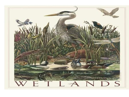 What is a Wetland? A wetland is an area of land whose soil is saturated with water either permanently or seasonally.