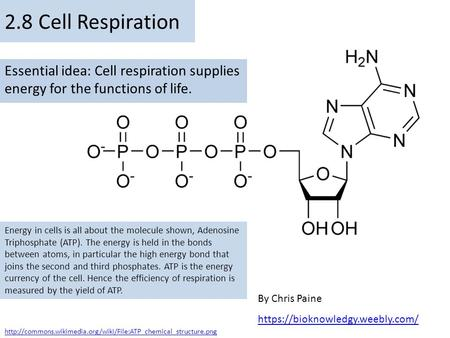2.8 Cell Respiration Essential idea: Cell respiration supplies energy for the functions of life. Energy in cells is all about the molecule shown, Adenosine.