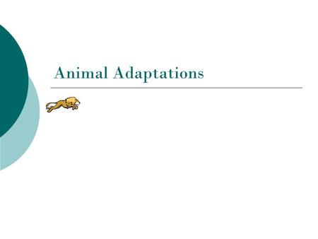Animal Adaptations. What is an adaptation?  An adaptation is a change in an animal's physical structure or behavior that helps an animal to survive in.