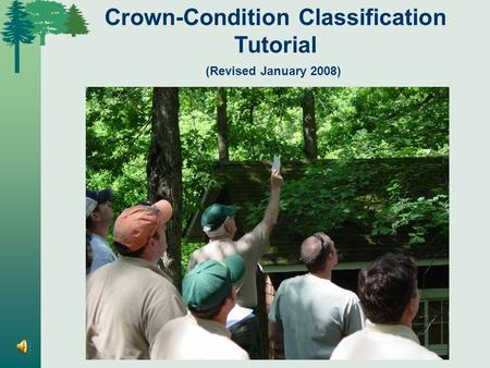 Crown-Condition Classification Tutorial (Revised January 2008)