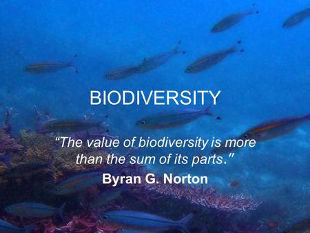 "BIODIVERSITY ""The value of biodiversity is more than the sum of its parts."" Byran G. Norton."